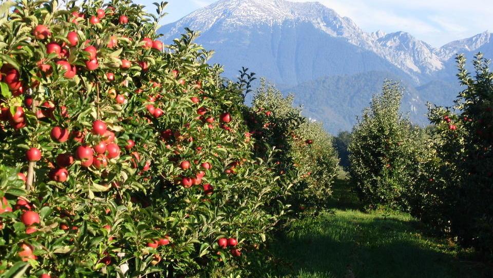 Pet rešitev za sadjarje