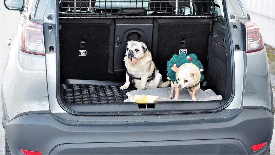Za nemško avtomobilsko tovarno je pes (še) vedno najboljši človekov prijatelj