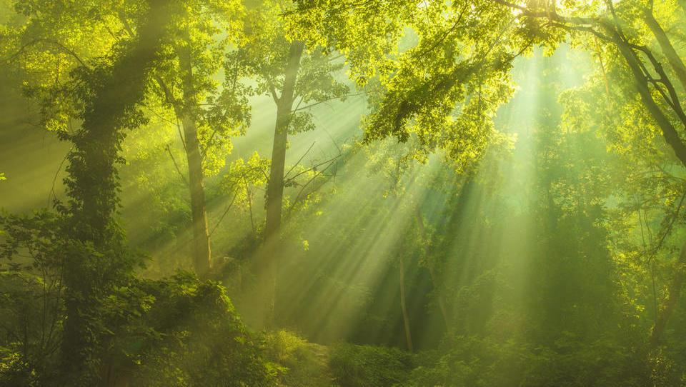 Saniranih je 80 odstotkov gozdov, poškodovanih v vetrolomu