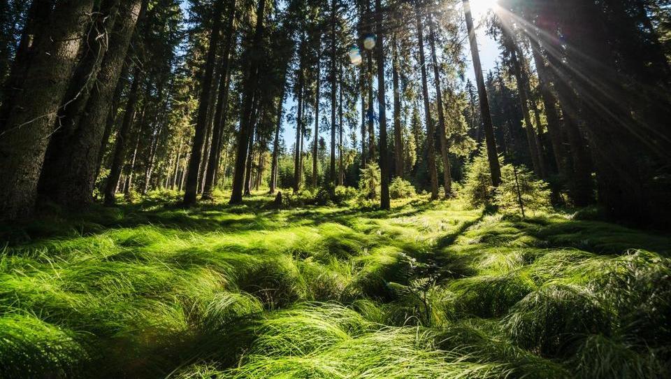 Slovenski državni gozdovi v 10 mesecih s 16 milijonov evrov dobička pred davki