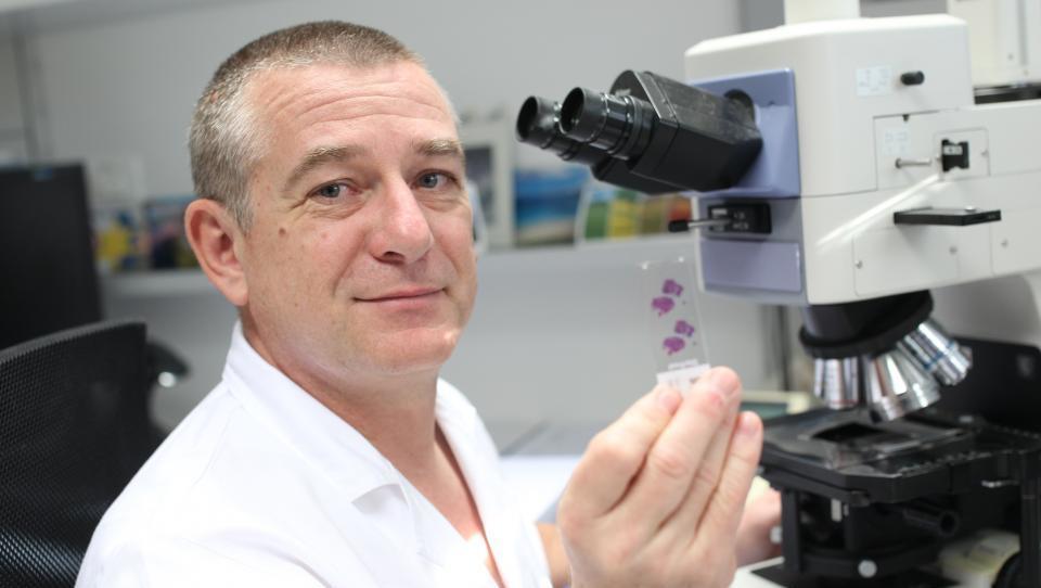 Imunoterapija raka ne gre brez patologov
