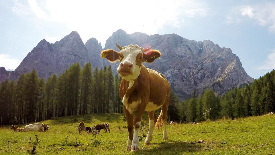 (Predstavitev proračuna EU po 2020) Danes fokus na skupni kmetijski politiki, za Slovenijo predvidoma 1,66 milijarde evrov