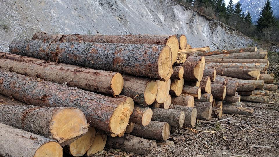 Pojasnila državnega gozdarskega podjetja