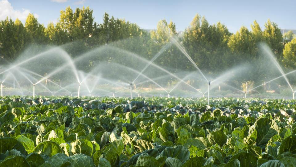 Vlada bi z novelo izboljšala namakanje kmetijskih zemljišč