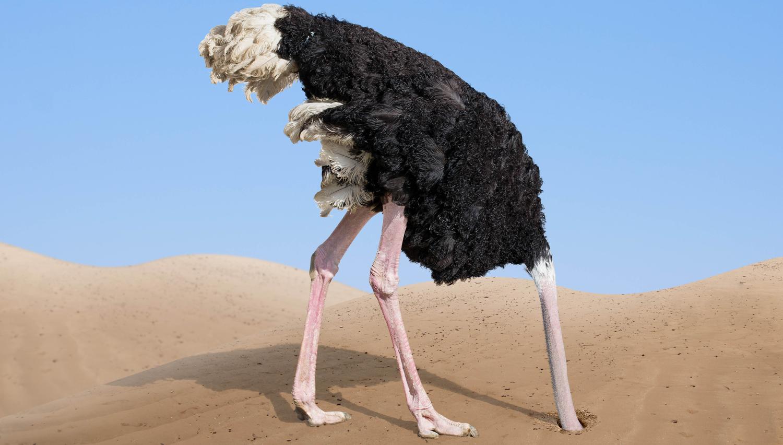 Stanovanjski sklad tišči glavo v pesek – težavo ima pred nosom, a se dela, da je ni