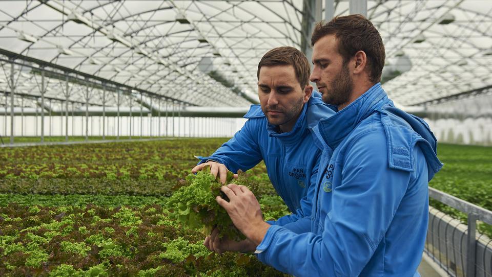 Panorganic bi jeseni začel graditi drugi rastlinjak v Avstriji