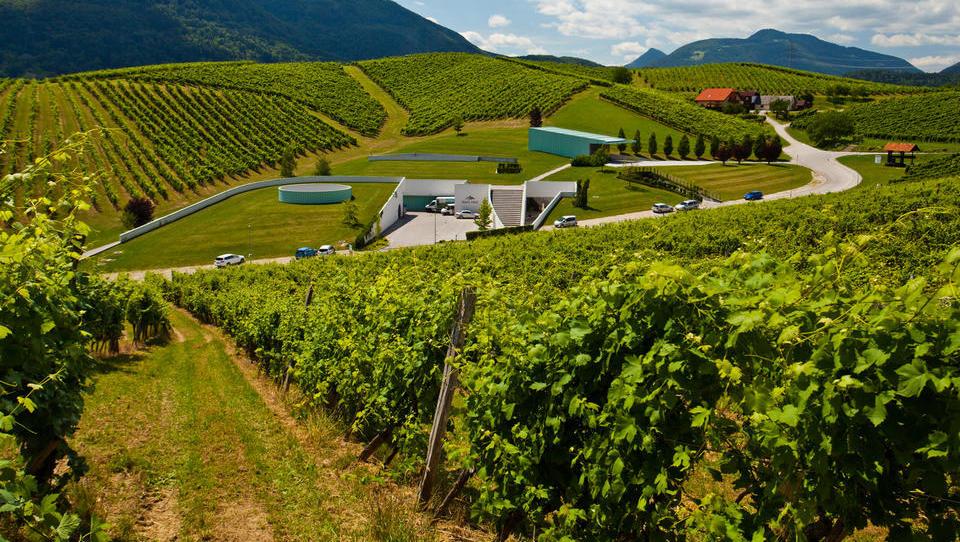 Kako bi vinogradništvo in vinarstvo potegnili iz stagnacije
