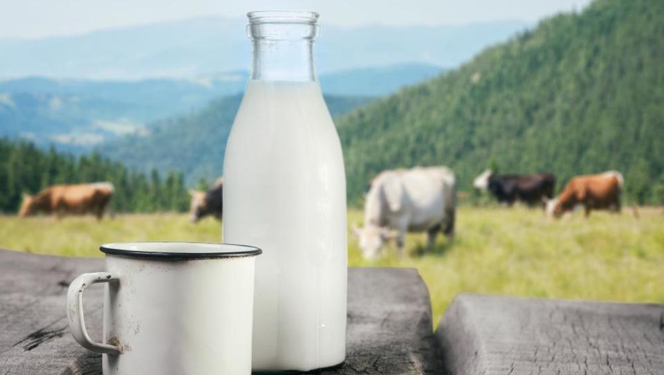 Znane podrobnosti o delitvi polmilijardne pomoči rejcem mleka v EU