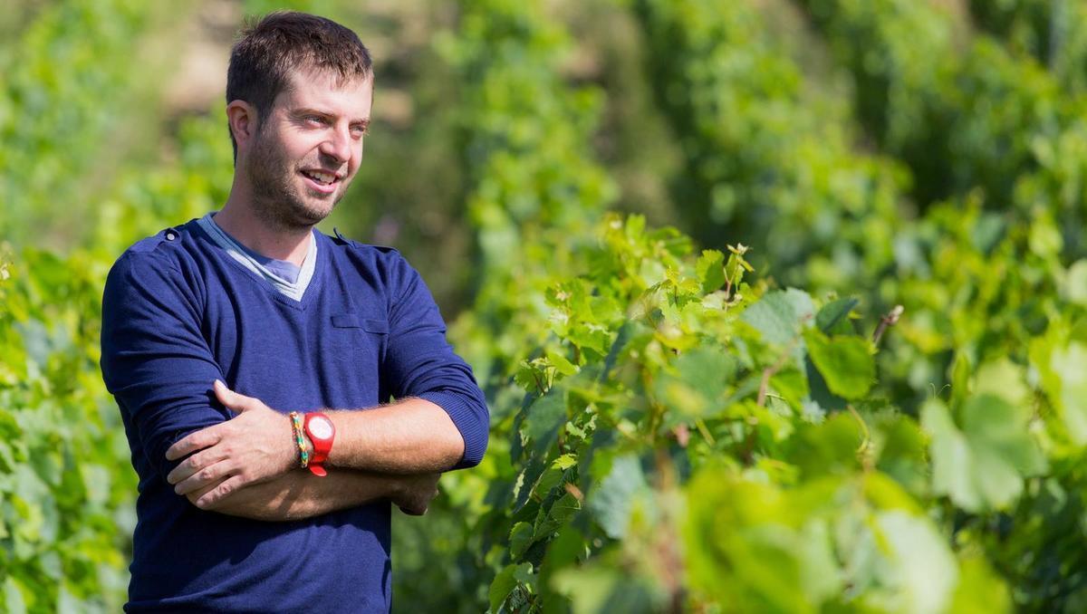 Naravna vina: Chardonnay